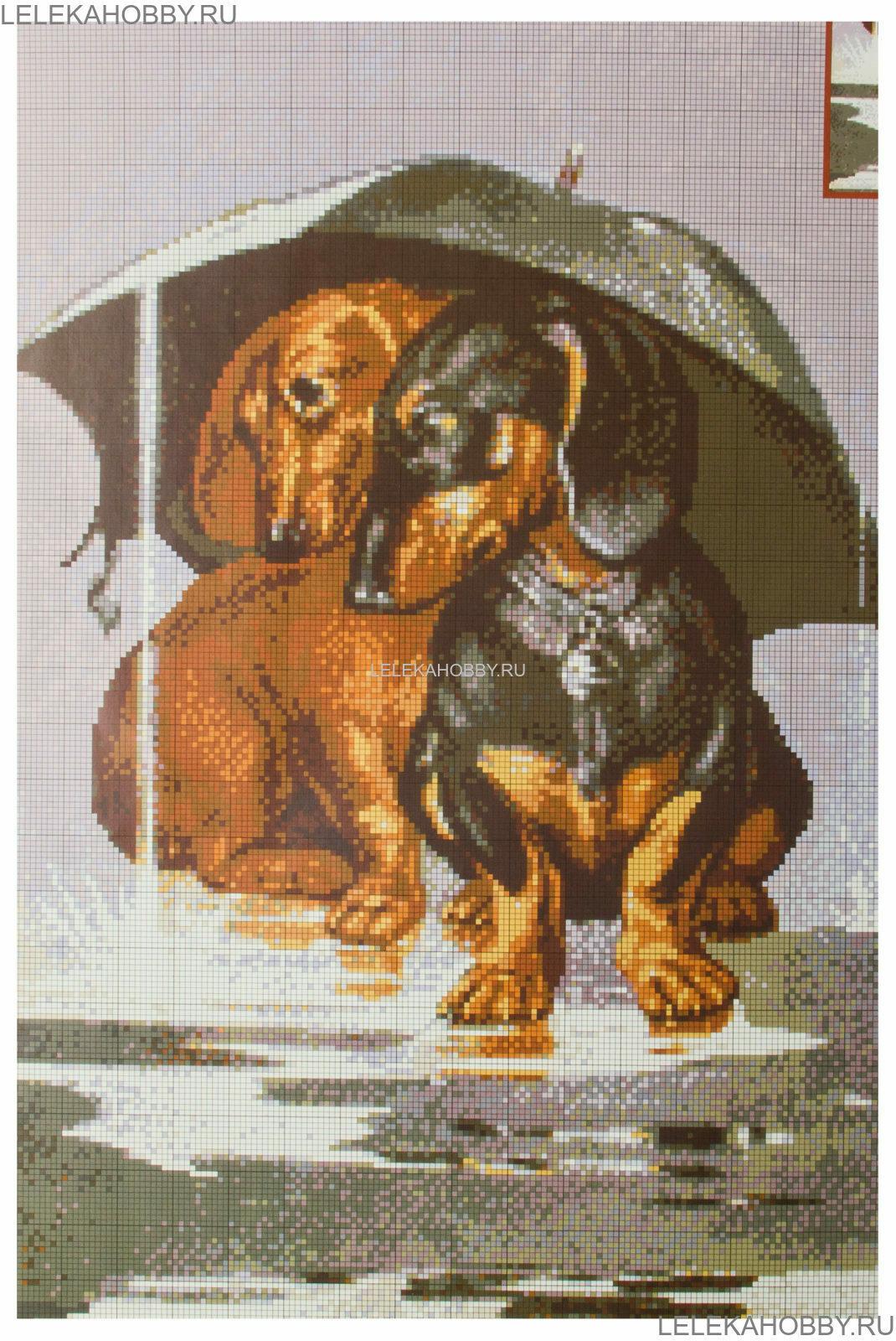 вышивка собака такса схема