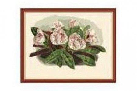 Раскраска по номерам Menglei Дикие орхидеи МG208, 40*50см ...